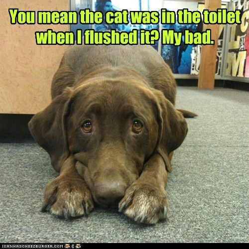 You mean the cat was in the toilet when I flushed it? My bad.