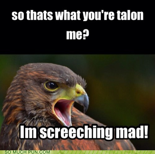 screeching,similar sounding,angry,falcon,talon