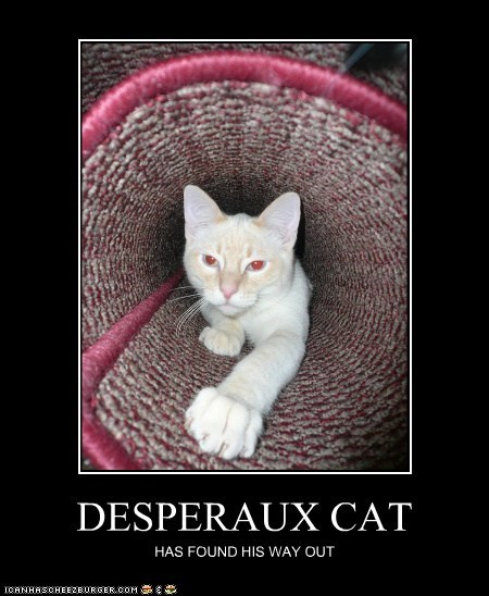 DESPERAUX CAT