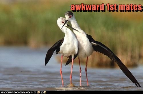 awkward 1st mates