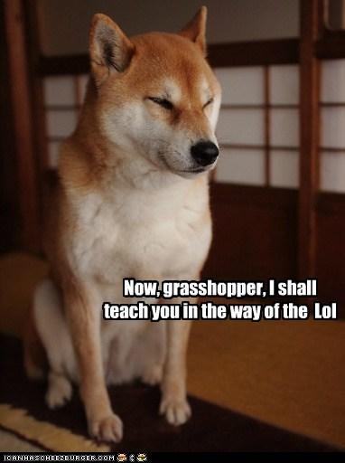 dogs,grasshopper,sensei,teacher,shiba inu
