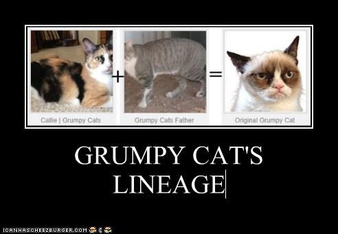 GRUMPY CAT'S LINEAGE