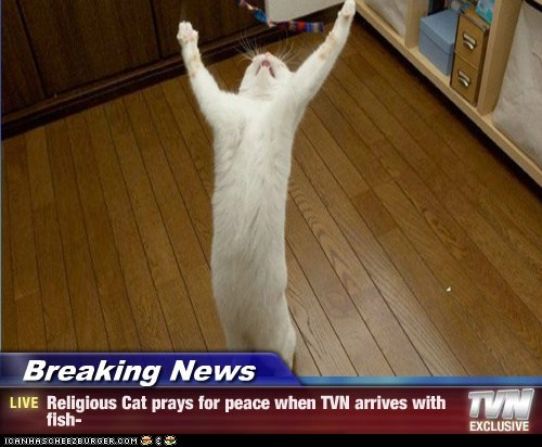 Breaking News - Religious Cat prays for peace when TVN arrives with fish-