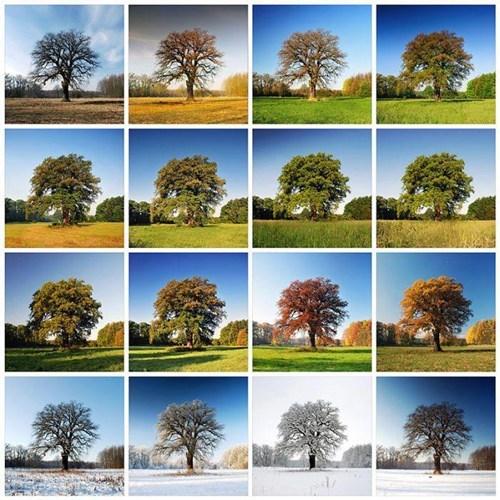 photography,instagram,landscape,tree