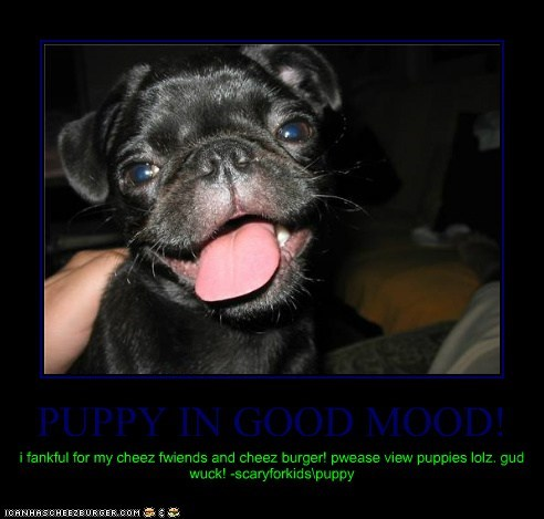 PUPPY IN GOOD MOOD!