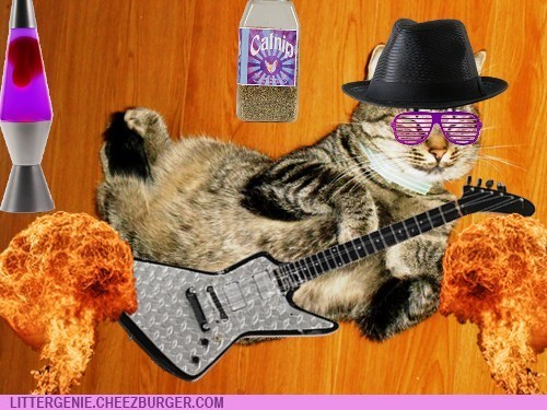 Bass Guitarist for Cat Nebula