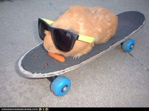 guinea pig on a skateboard