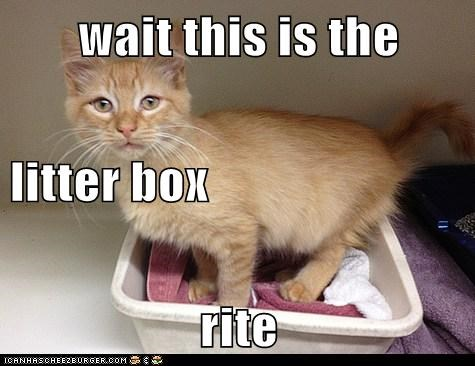 wait this is the  litter box rite
