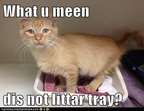 What u meen   dis not littar tray?