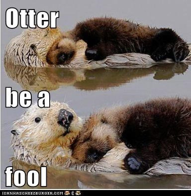 Otter be a fool