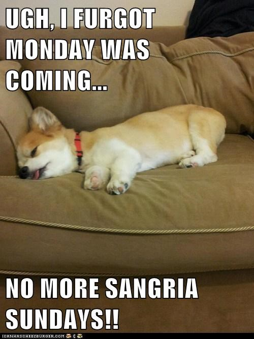 dogs,drunk,puppies,corgi,sangria,hung over,mondays
