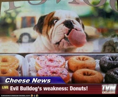 Cheese News - Evil Bulldog's weakness: Donuts!