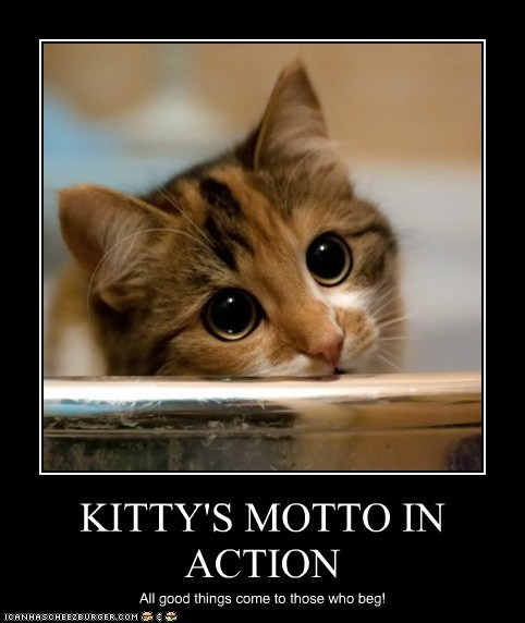 KITTY'S MOTTO IN ACTION