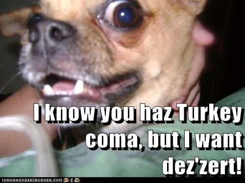 I know you haz Turkey coma, but I want dez'zert!