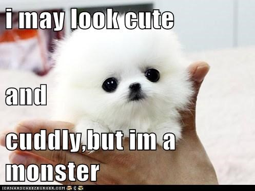 i may look cute and  cuddly,but im a monster