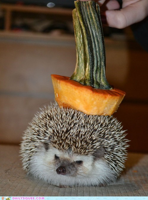 Reader Squee: Seasonal Hedgehog