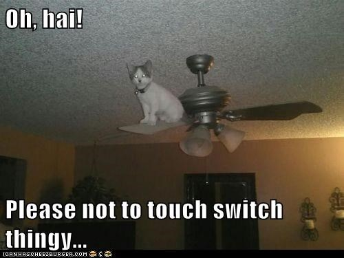 Oh, hai!  Please not to touch switch thingy...