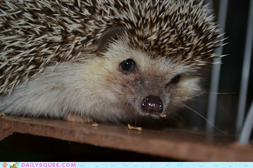 Reader Squee: Boris the Hedgehog