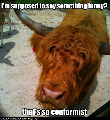 Elitist Cow Judges You