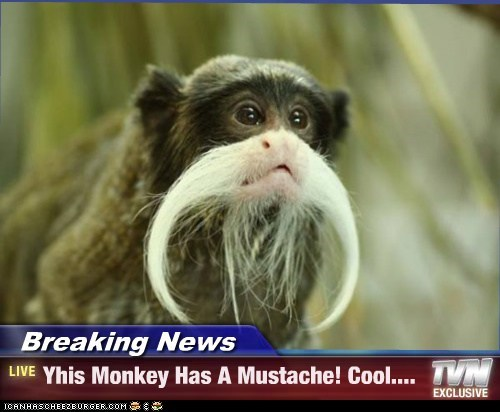 Breaking News - Yhis Monkey Has A Mustache! Cool....