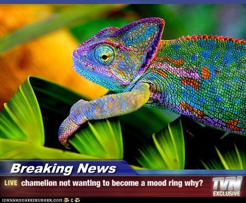 Breaking News - chamelion not wanting to become a mood ring why?