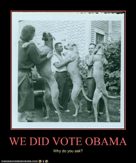 WE DID VOTE OBAMA