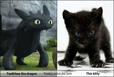 Toothless the Dragon Totally Looks Like This Kitty