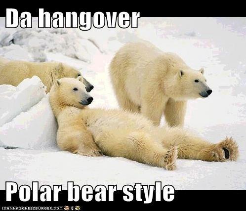 Da hangover  Polar bear style