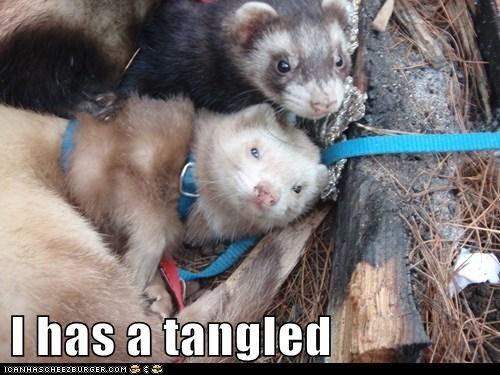I has a tangled