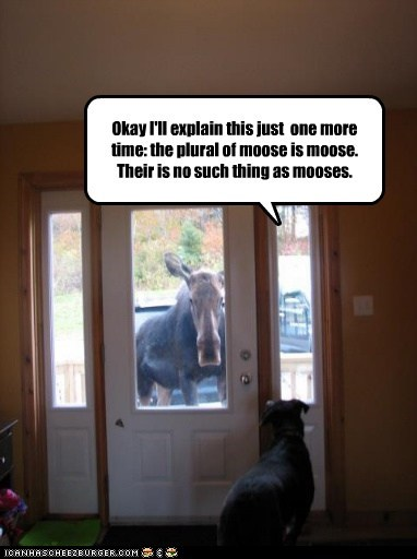 dogs,One More Time,explain,plural,moose