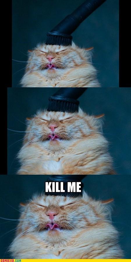 cat,kill me now,pets,vacuum