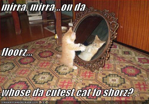 cute,kitten,lokittehs,lolcats,mirror