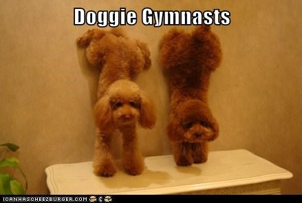 Doggie Gymnasts