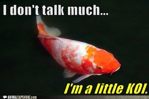 coy,pun,koi,quiet,talking,fish