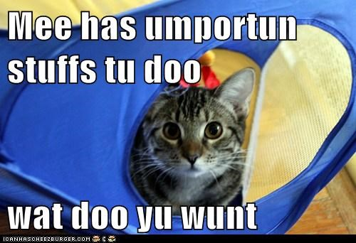 Mee has umportun stuffs tu doo  wat doo yu wunt