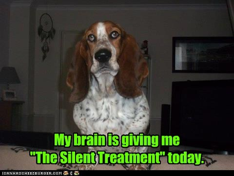 dogs,brain fart,basset hound,silent treatment,brain,derp