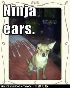 Ninja ears.