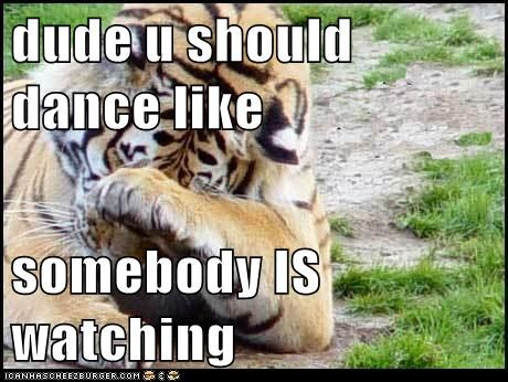dancing,tigers,embarrassed,facepalm,dance like no one is watching
