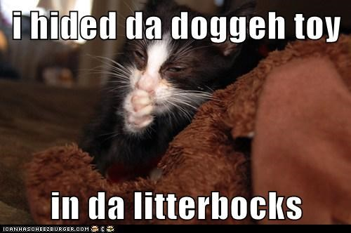 i hided da doggeh toy  in da litterbocks