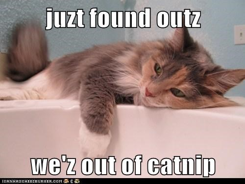 juzt found outz  we'z out of catnip