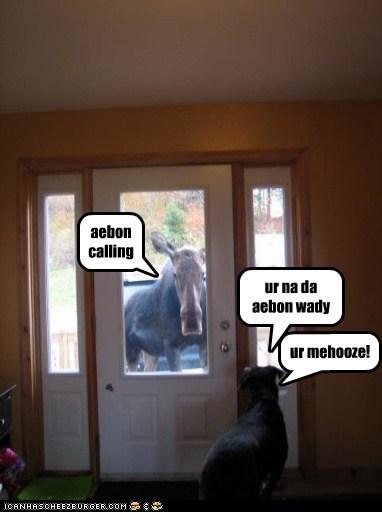 aebon calling