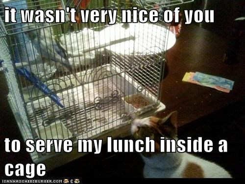 it wasn't very nice of you  to serve my lunch inside a cage