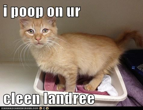 i poop on ur  cleen landree