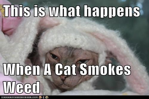 This is what happens  When A Cat Smokes Weed