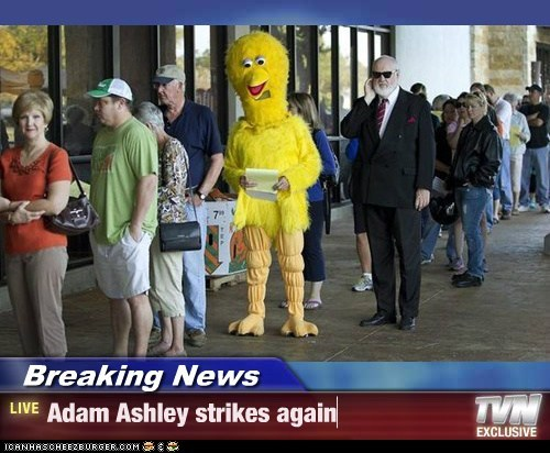 Breaking News - Adam Ashley strikes again