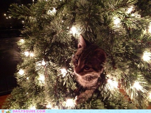 christmas,reader squee,pets,christmas tree,decorations,Cats,squee,holidays