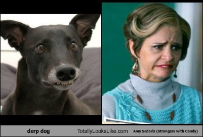 Derp Dog Totally Looks Like Amy Sedaris (Strangers with Candy)