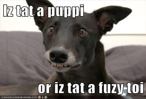 Iz tat a puppi  or iz tat a fuzy toi