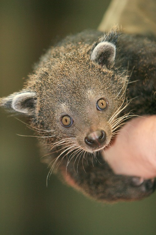 Squee Spree: Bearcat Barely Victorious!