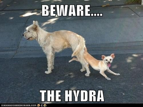 Beware the HYDRA!!!